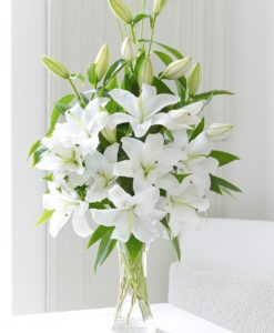 Oriental Lily Special