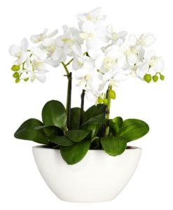 The Loveliness Of Orchids